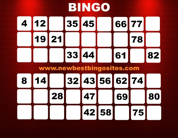 bingo with free bonus